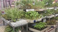 Plantones en el Mercado Central de Valencia