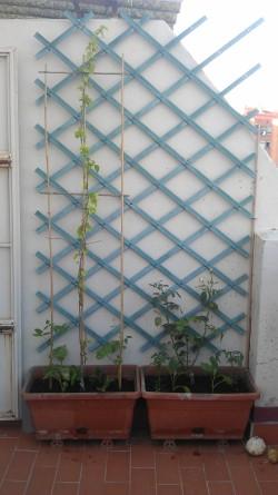 Jardineras, cañar y celosía (17 junio)