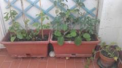 Jardineras con hortícolas y ornamentales (24 junio)